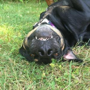silly upside down dog!